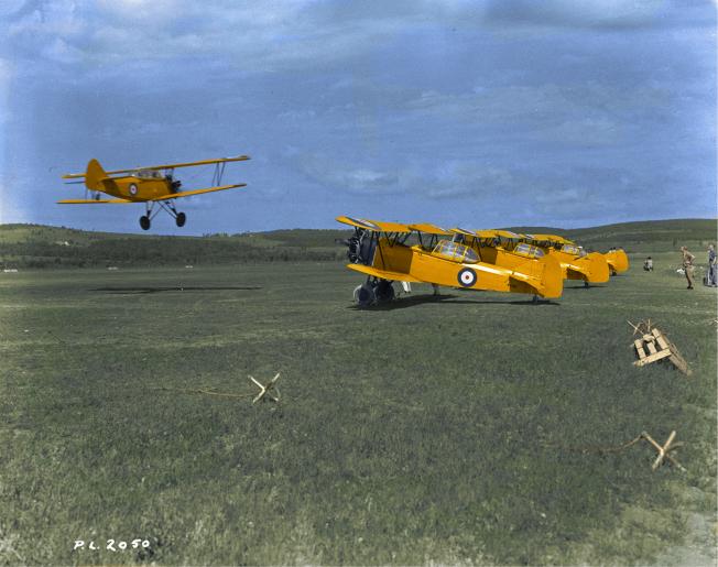 Fleet Finch colour
